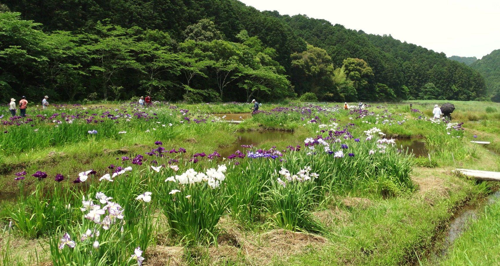 6月の四万十市トンボ自然公園 : ...