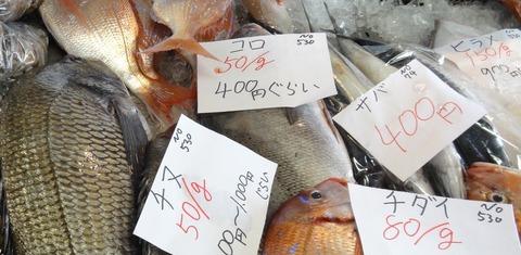 天然色市場鮮魚 (2)
