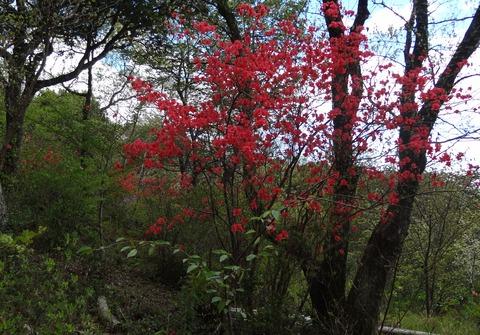 モネの庭 自然の森 (2)
