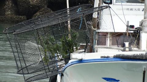 アオリイカ籠漁
