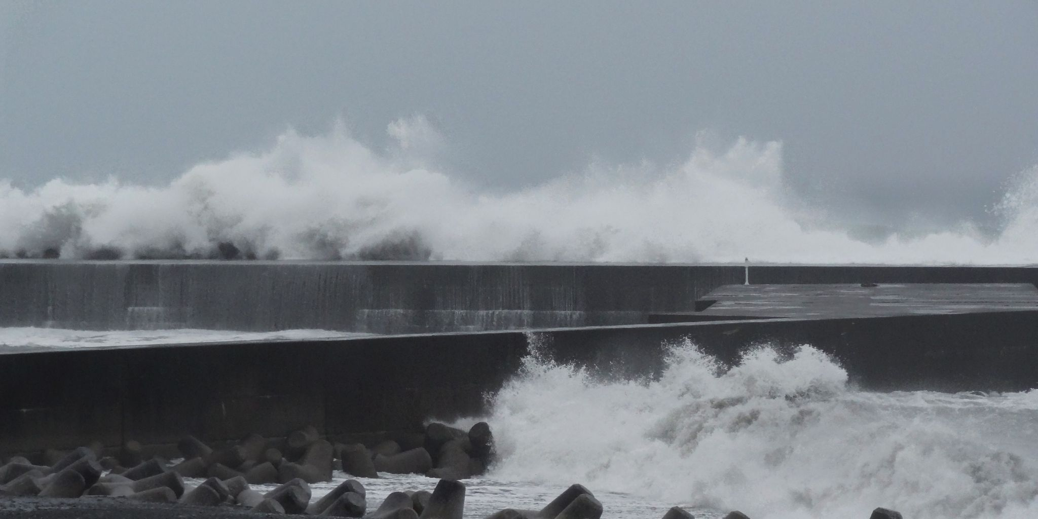 波浪 : 土佐料理 旬の鰹がゆく!