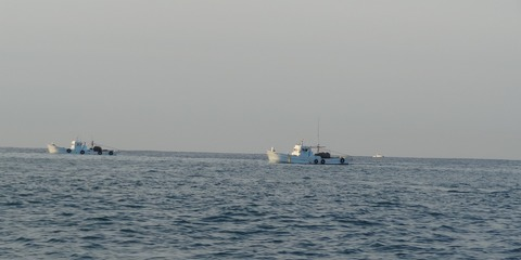 桂浜沖 ドロメパッチ網漁