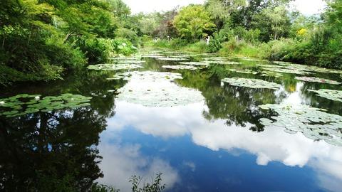 7月モネの庭