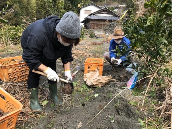 2020.1.16 里芋掘り (23)