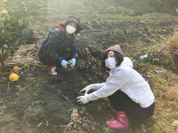 2020.1.16 里芋掘り (10)