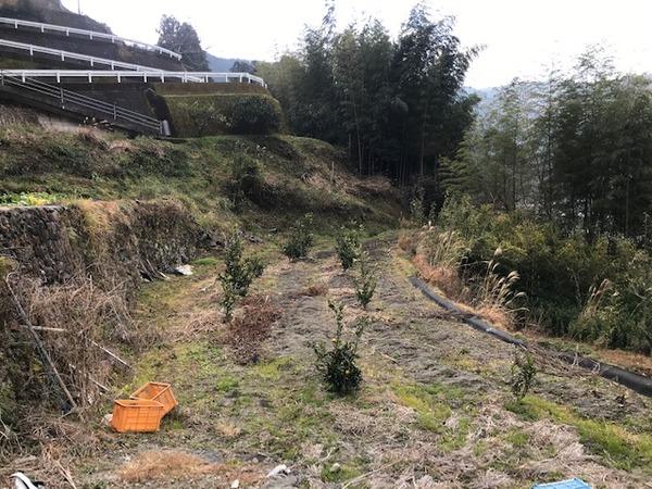 2020.1.16 里芋掘り (26)