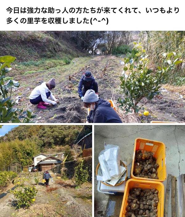 2020.1.16 里芋掘り (1)
