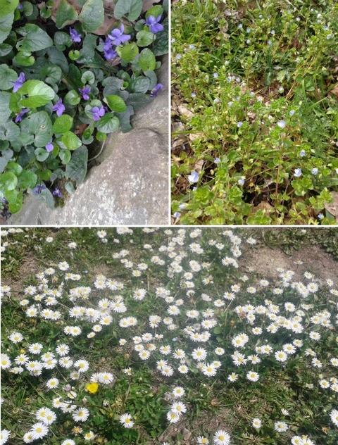 blog fiori