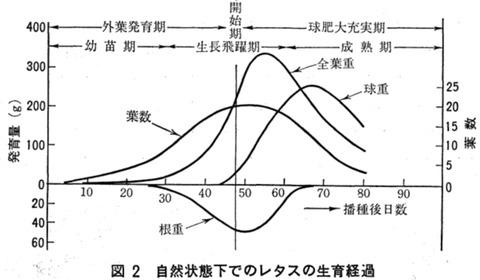 レタスの生育過程