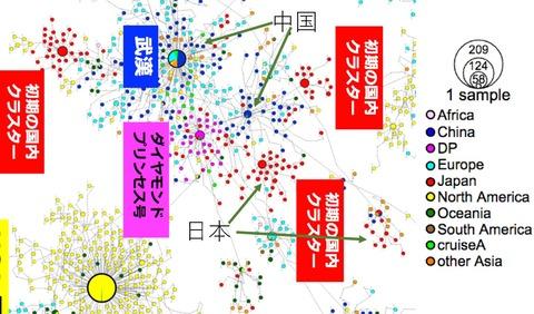 コロナ遺伝子分布図 武漢ー日本