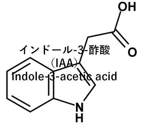 オーキシン分子構造