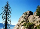 sequoia national park 02