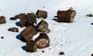 Petrified Forest 03