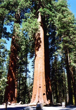sequoia national park 08