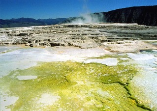 mammoth hot springs 03