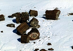 petrified forest 10