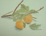 枝つきの柿 〔October 19, 2002〕