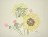 向日葵といちご草 〔May 30, 2004〕