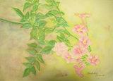 ピンクのノウゼンカズラ 〔September 13, 2006〕