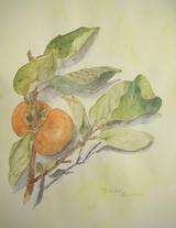 枝葉付きの柿 [November 11, 2010]