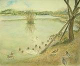 伊丹市・こや池の水鳥と鳩 〔April 8, 2008〕