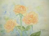 '09薔薇-その後のその後- 〔March 15, 2009〕
