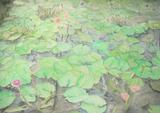 花鳥園の睡蓮池 [February 2, 2012]