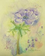 紫色のアネモネ 〔December 18, 2007〕