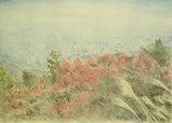 晩秋の六甲山中腹 〔November 28, 2005〕