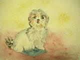 親友の愛犬 〔May 21, 2008〕