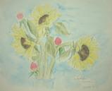 ひまわり・いちご草 〔May 29, 2004〕