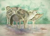 狼の群れ [April 2, 2010]