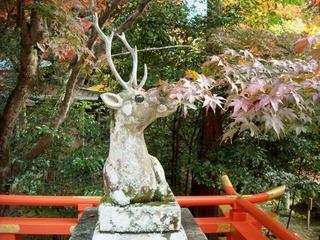 大原野神社4