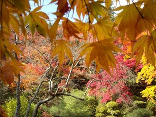金蔵寺10