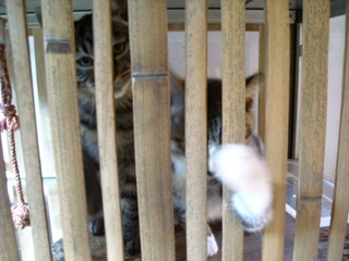 金蔵寺子猫
