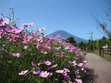 コスモス富士