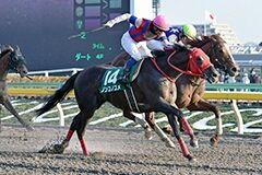 pic_horse3-9