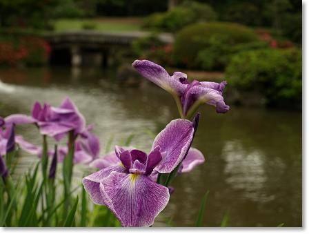 藤田記念庭園 1