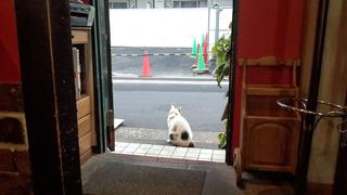 0523招き猫
