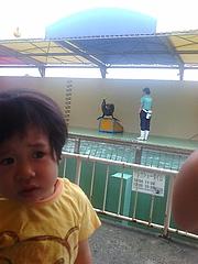 加茂水族館のアシカ