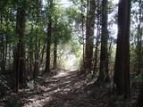 金山の森1