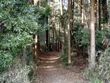 金山の森4