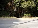 金山の森3
