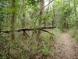 三ケ尾の森1