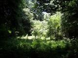 関さんの森2