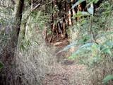 金山の森2