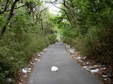 ゴミの道1