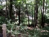 関さんの森3