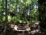 関さんの森5