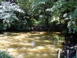 関さんの森4